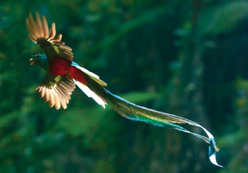 Free Quetzal