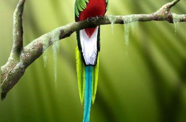Nice Quetzal 10065