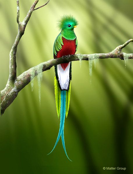 Nice Quetzal