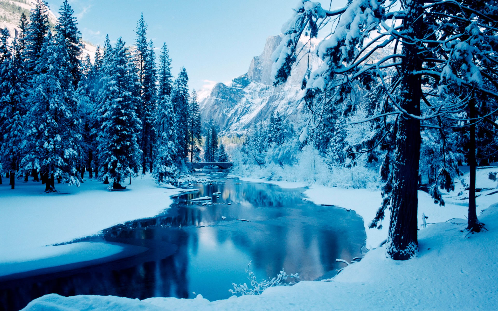 Tree On Winter