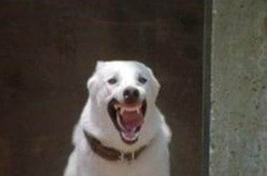 Free White Dog