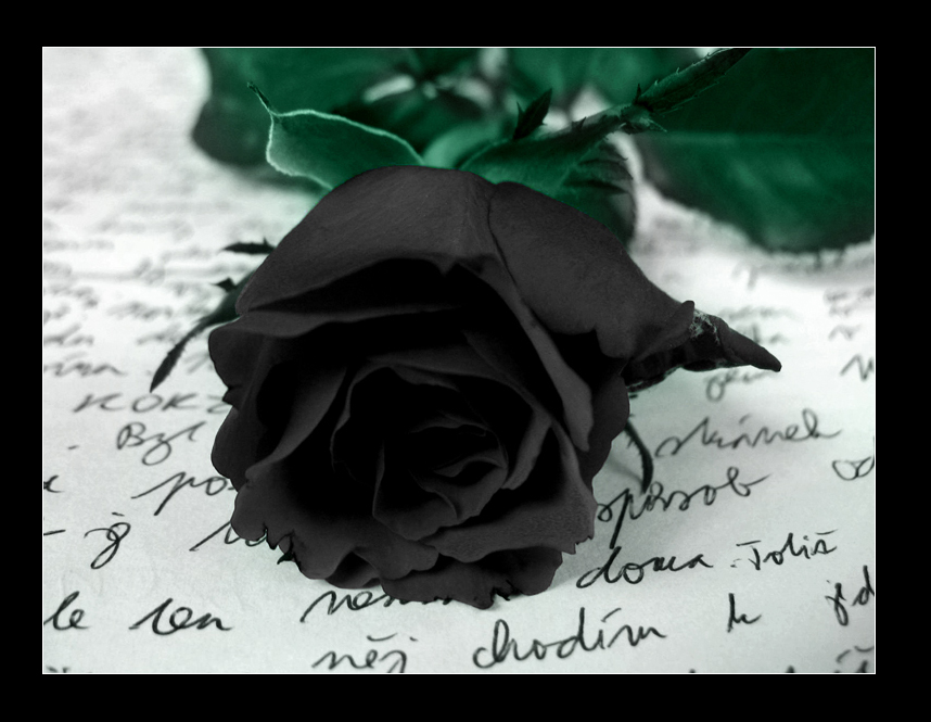 Awesome Black Rose Image