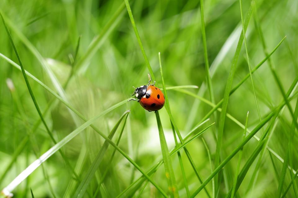 Ladybug Nature Image