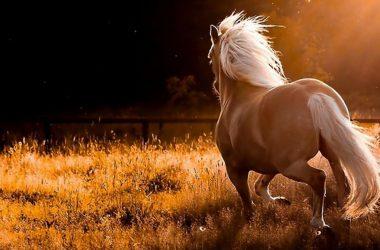 White Horse Image