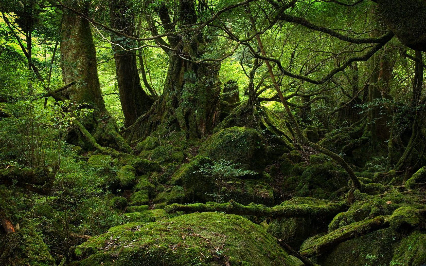 Awesome Jungle Photo