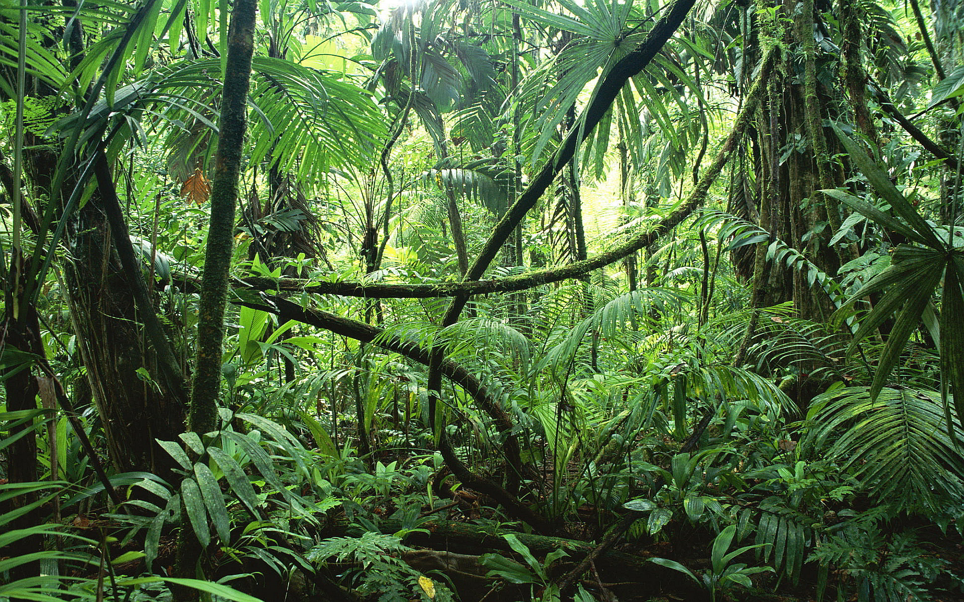 Beautiful Jungle Photo
