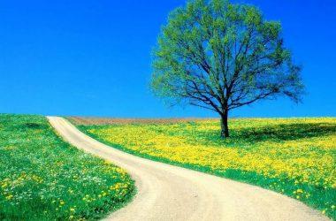 Beautiful Natural Scene 11877