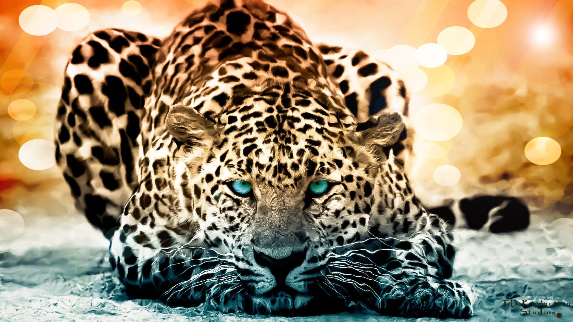 Best Jaguar Wallpaper