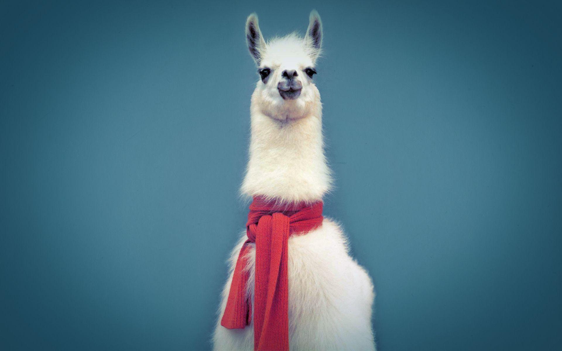Best Llama Image 12186