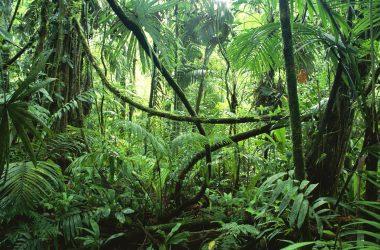 Natural Jungle Photo 11934