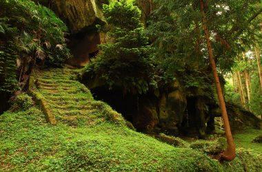 Nice Jungle Photo 11938