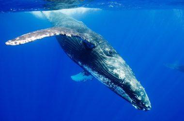 Best HD Whale Wallpaper