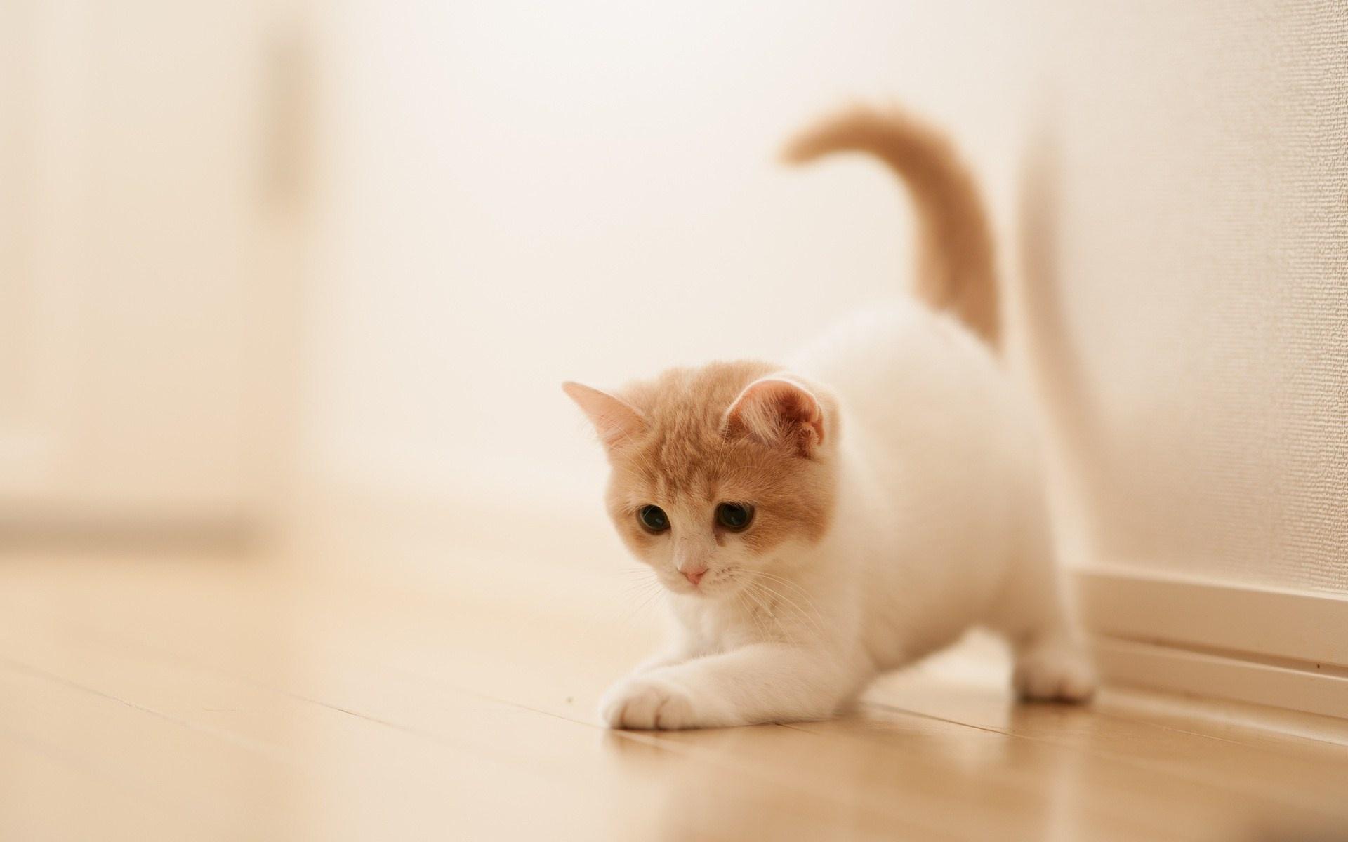 Nice Cute Image Cat Cute Wallpaper 12540
