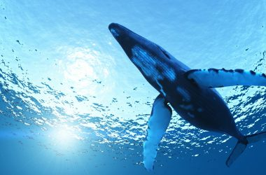 Wonderful HD Whale Wallpaper 12469