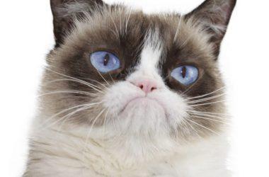 Free Grumpy Cat 13100