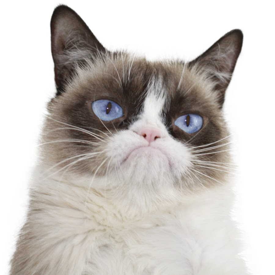Free Grumpy Cat