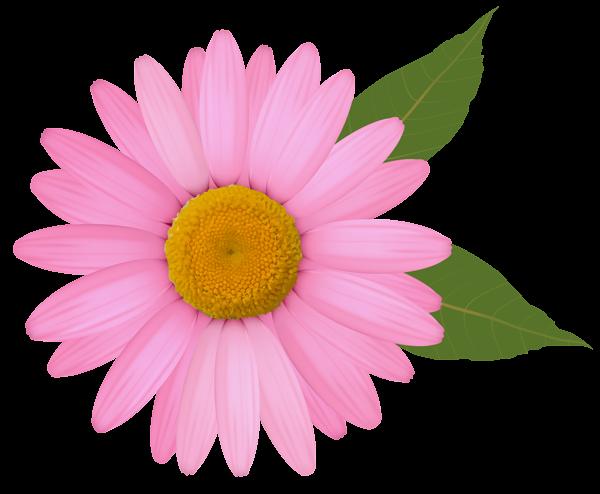 Stunning Pink Daisy