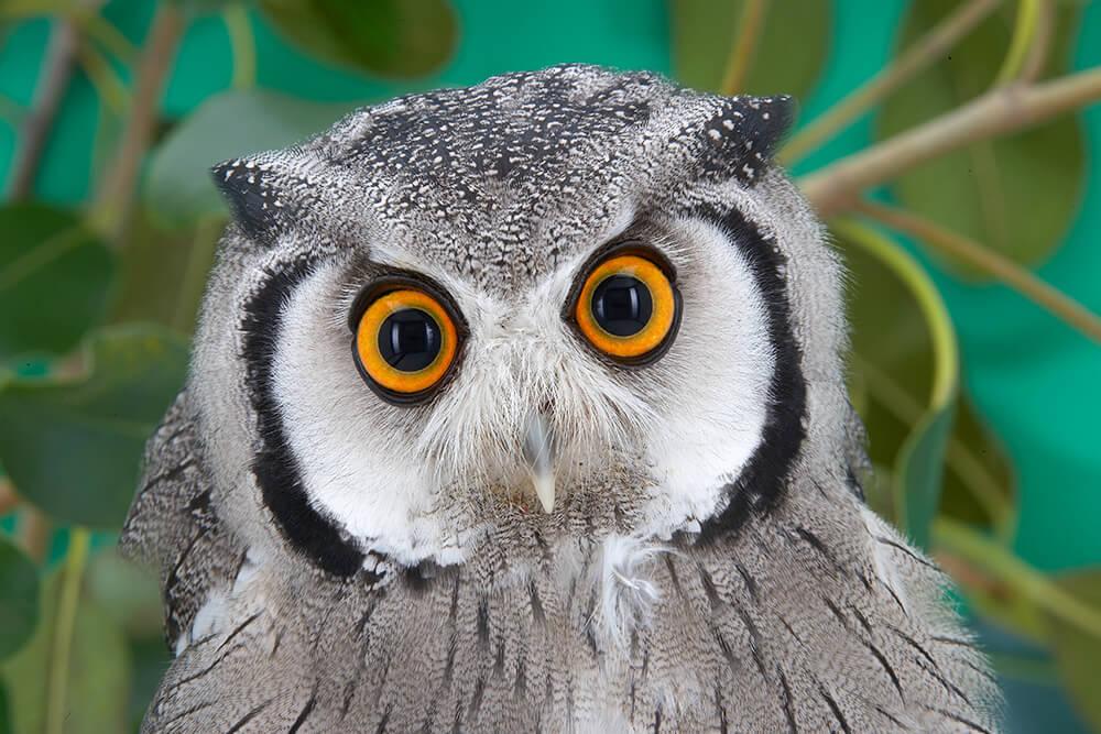 Awesome Owl Photo