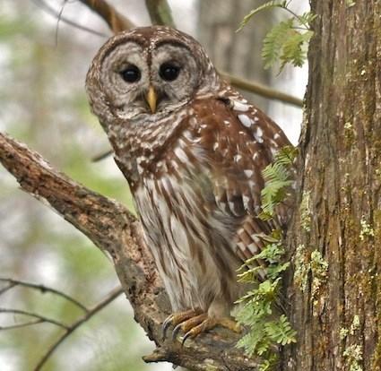 Nice Owl Photo