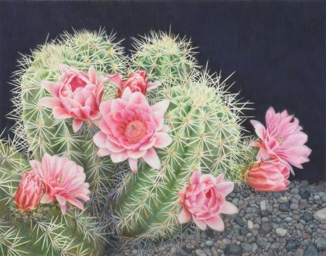 Top Cactus Flower