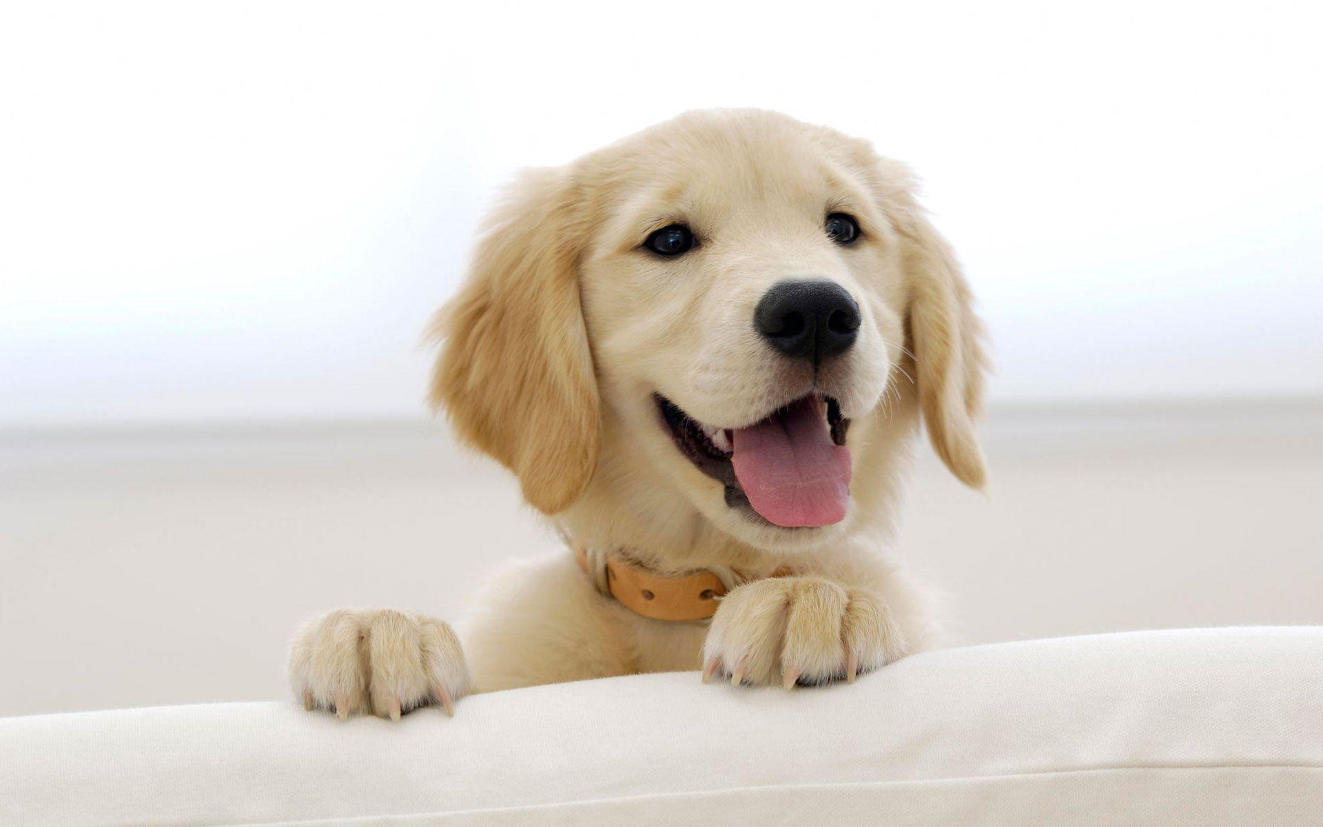 Cute Dog Wallpaper