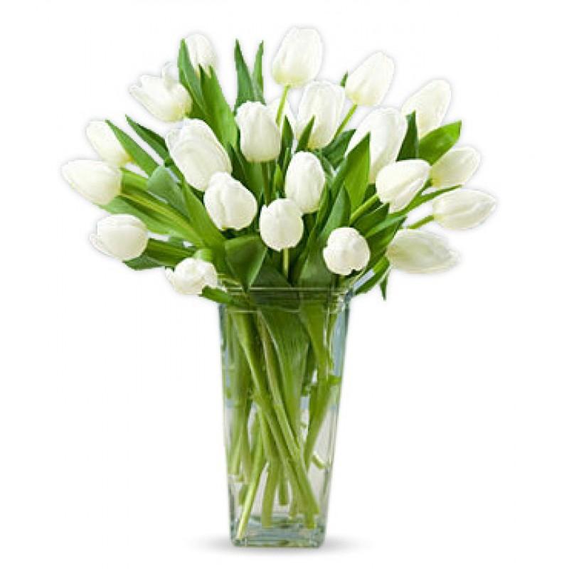 Free White Tulips