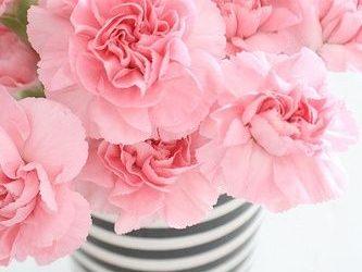 HD Pink Flower