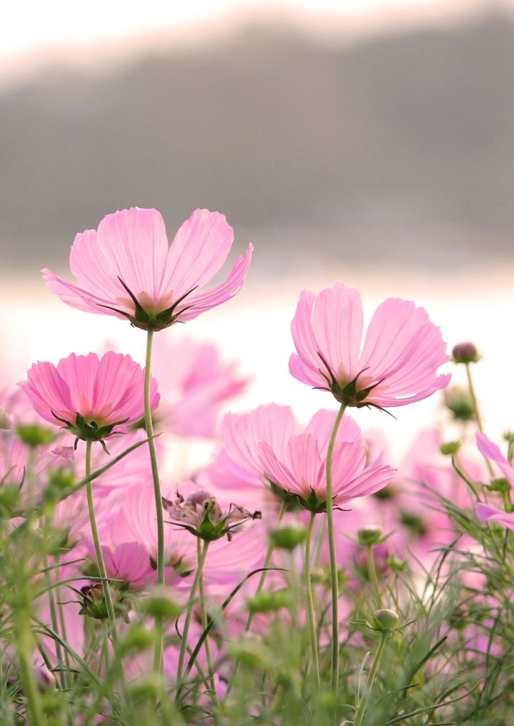 Landscape Pink Flower