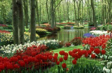 Natural Spring River