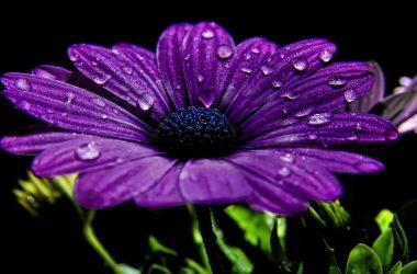 Nice Purple Flower 14504