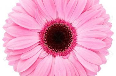 Stunning Pink Flower