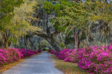 Beautiful Flowers Garden 14589