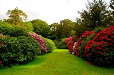 Cute Flowers Garden