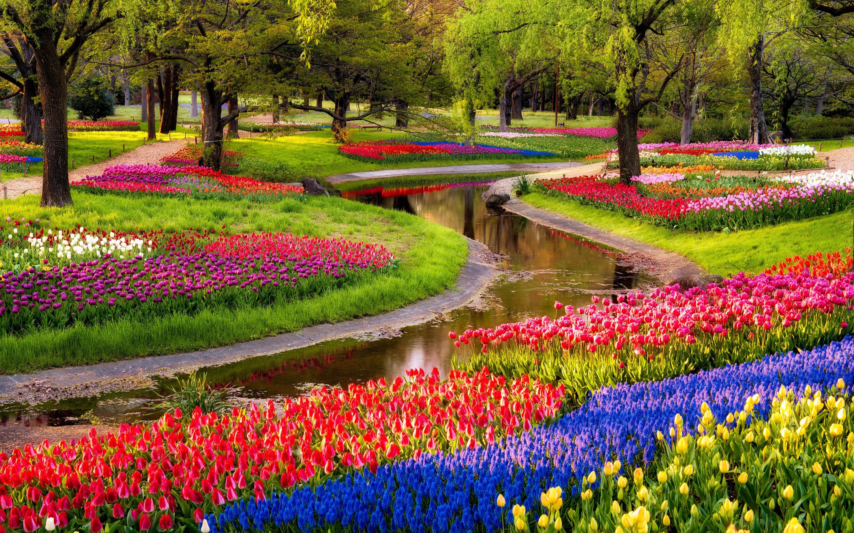 Flowers Garden Image