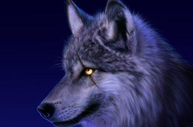 Nice Wolf Wallpaper