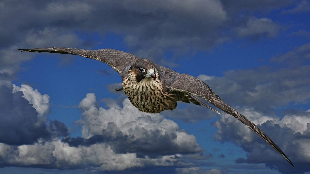 Wonderful Falcon Wallpaper