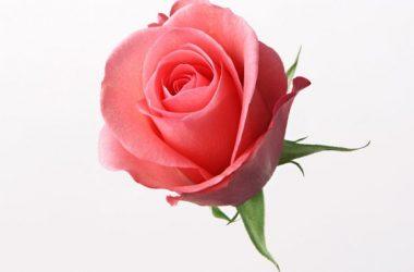 Awesome Beautiful Flower
