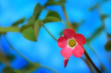 Cool Spring Flower