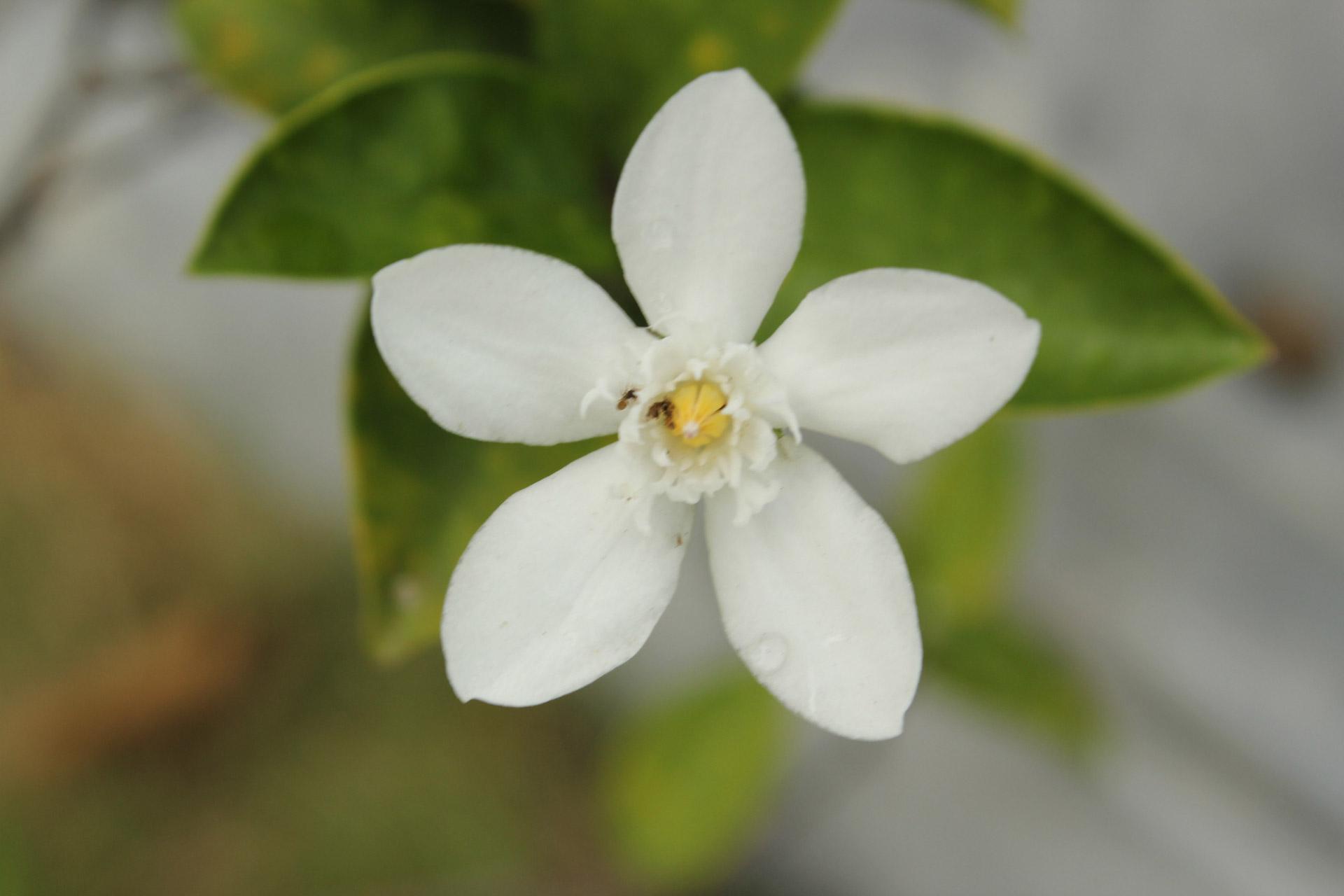 Cool White Flower