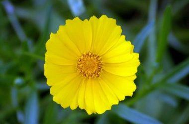 Cute Yellow Flower 15799