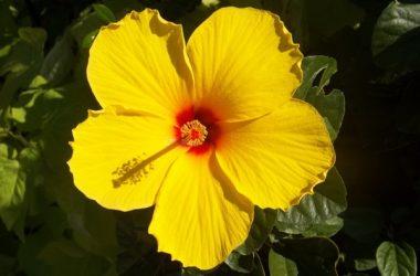 Landscape Yellow Flower 15808