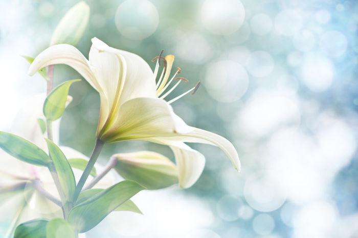 Lovely White Flower