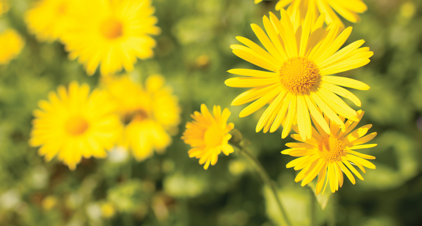 Yellow Flower Wallpapers 15814 Hdwpro