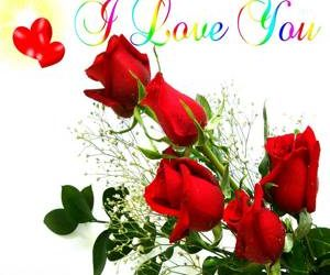 Free Love Rose