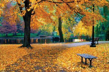 Autumn season 17659