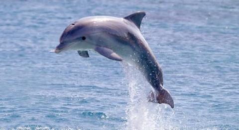 Nice Dolphin