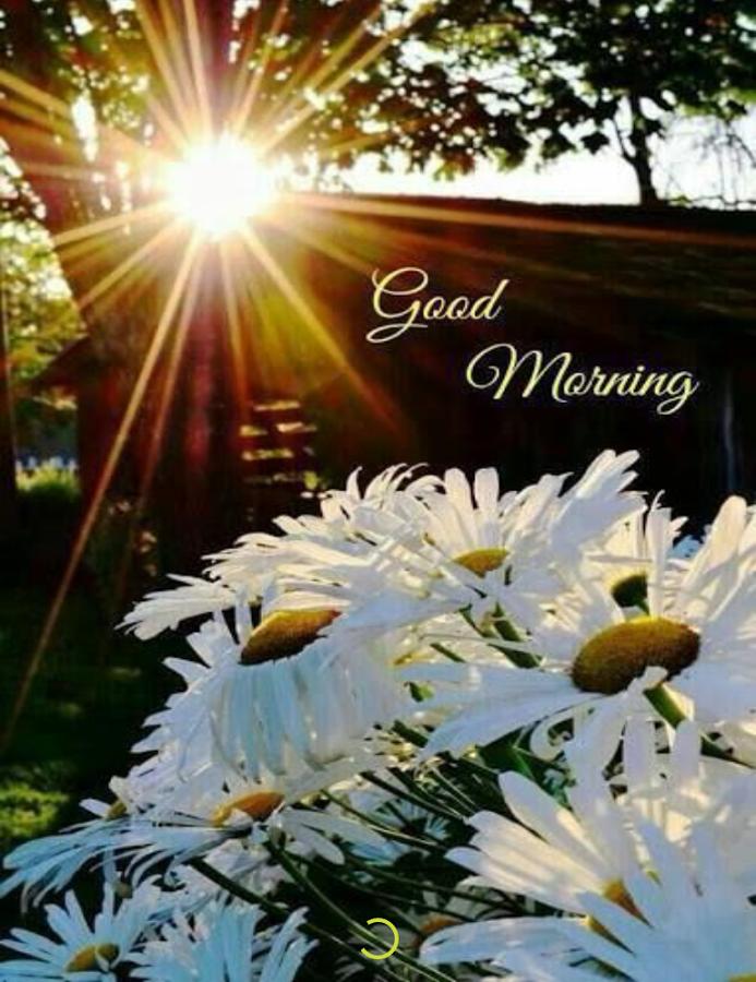 Sunrise Good Morning