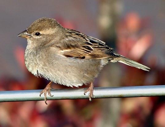 Best Sparrow