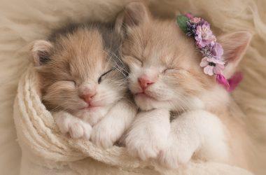 Free Cute Kitten