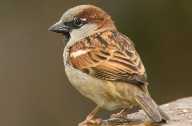Free Sparrow